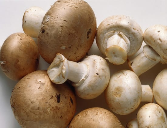The 'Mushroom Diet' a.k.a The M-Plan